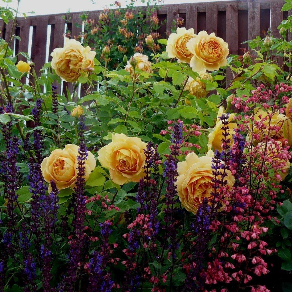 Gėlėms